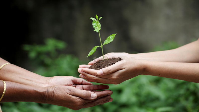 young-hands-giving-plant-closeup-view-34821170_1